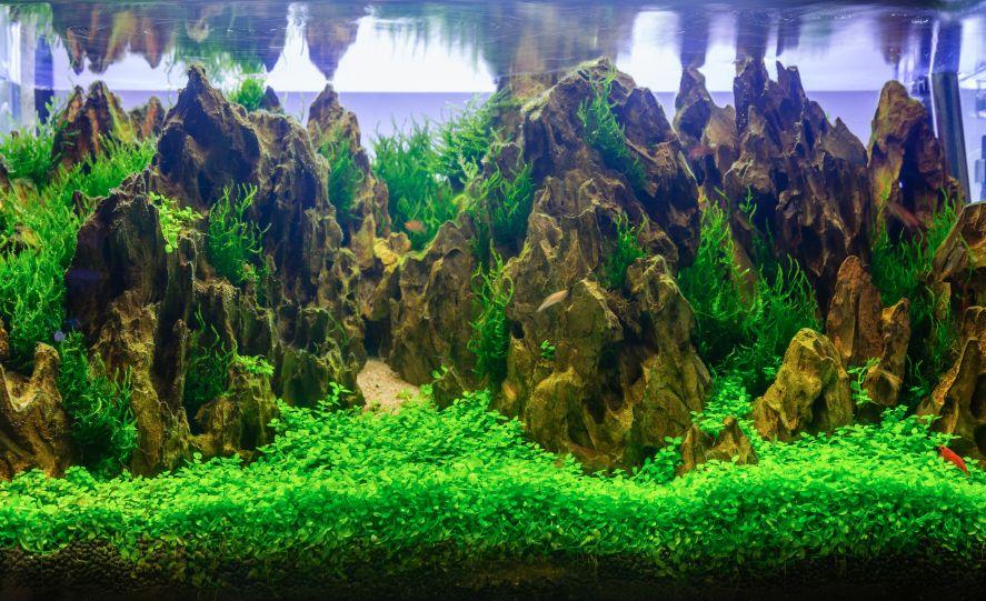 Nano Aquarium einrichten Felsen klein Pet Aquarium Pinterest - deko fur aquarium selber machen