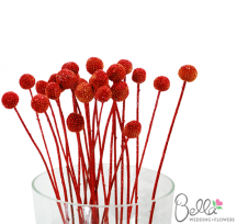Red Billy Buttons Flowers Flower Centerpieces Wedding Flowers