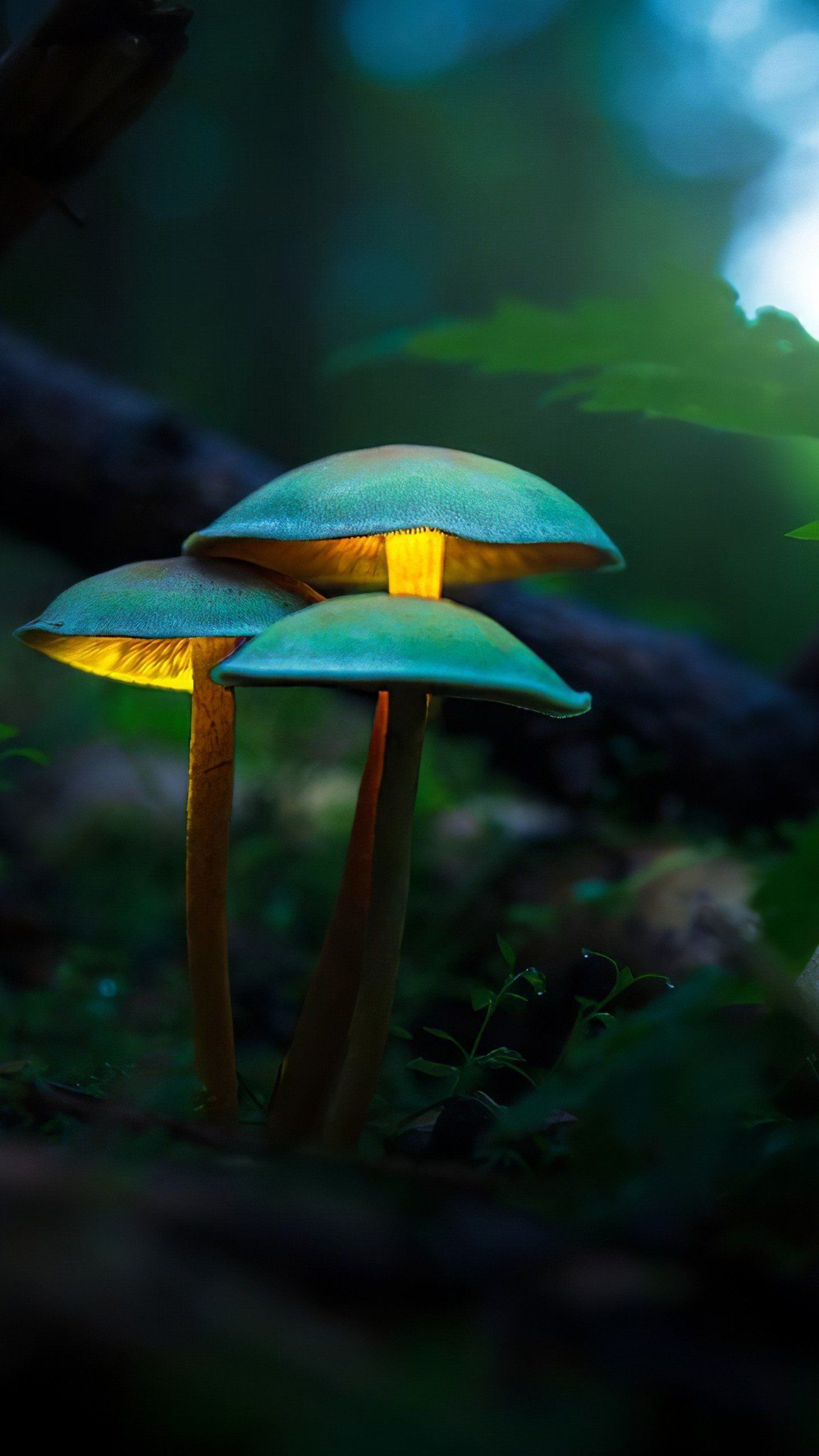 Mushroom Plants Glowing 4k Hd Artist Wallpapers Photos And Pictures Mushroom Plant Mushroom Wallpaper Wallpaper