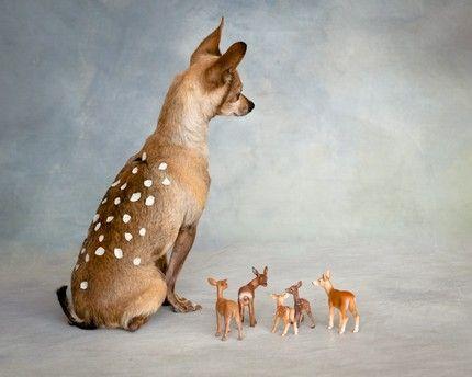 chihuahua deer! @John Jenkins Peeps\' next Halloween costume? haha ...