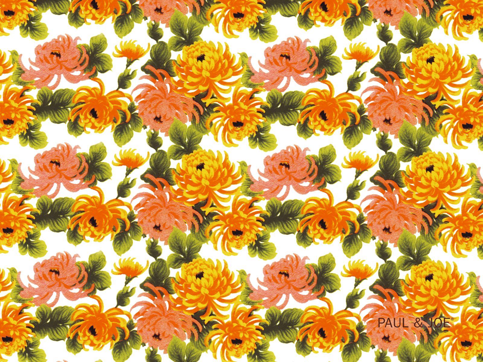 Paul Amp Joe Beaute Desktop Wallpaper Chrysanthemums