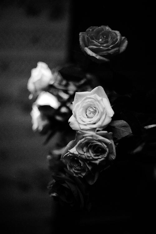 любом варианте, цветные фотографии с белыми и черными розами лето