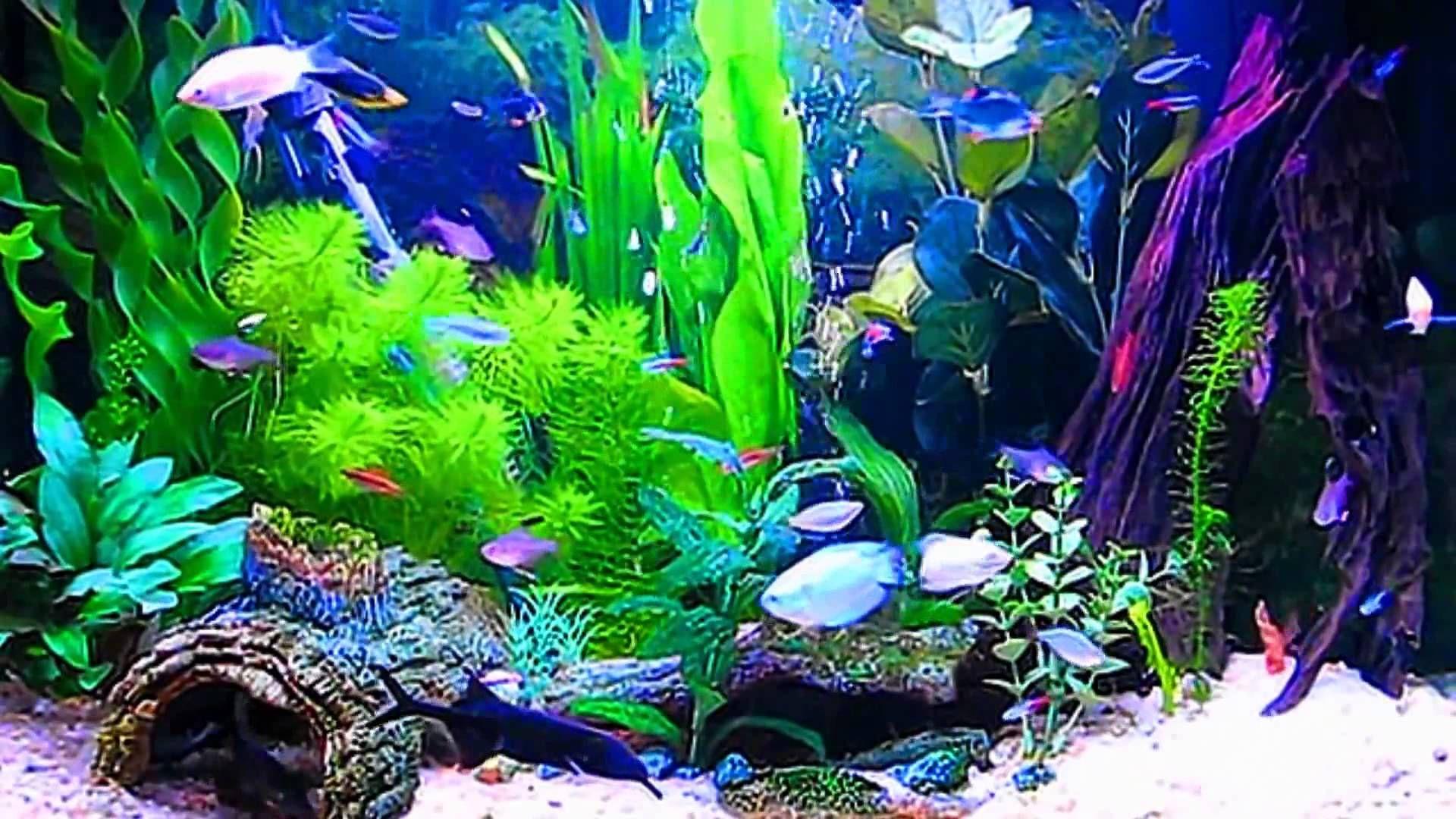 Картинки на экран аквариум