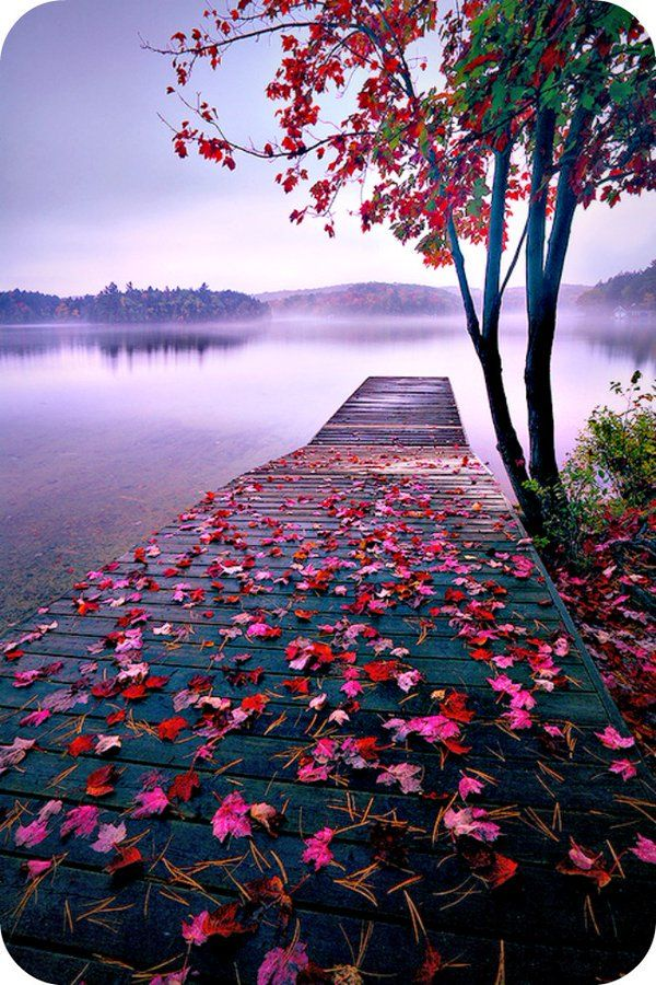 Autumn Leaves Nature Pictures Beautiful Nature Wallpaper Nature Photography