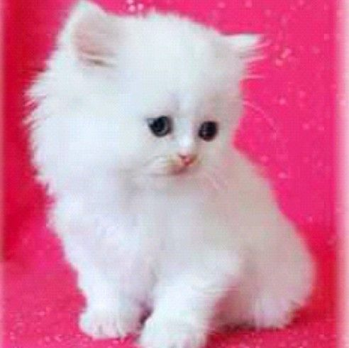 Kim Kardashian's painfully, excruciatingly adorable kitten