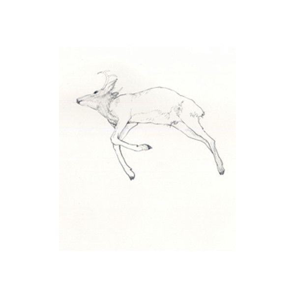 Dead Deer Deer Art Drawings