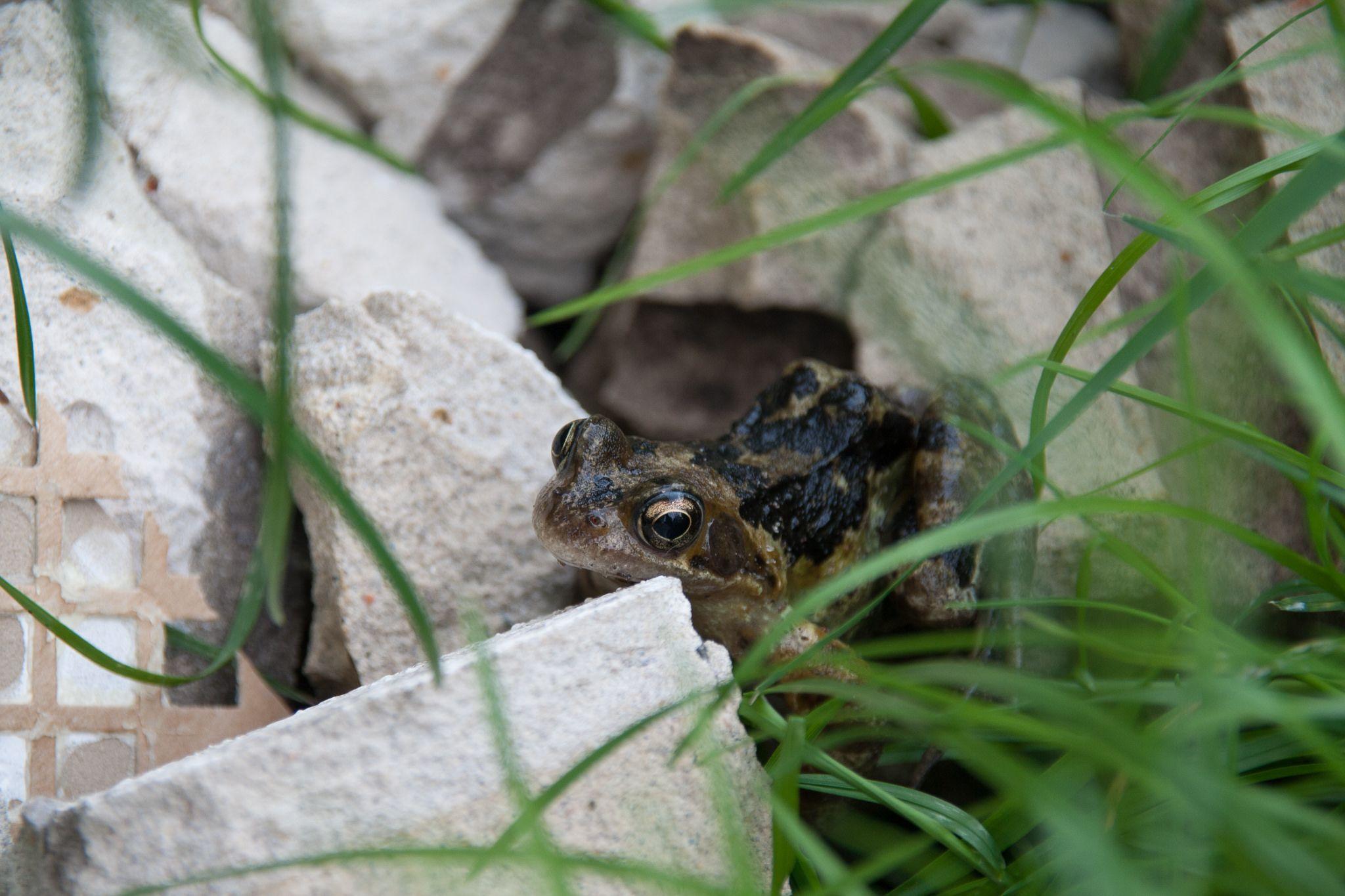 Ganz Ohne Teich Animals Frog