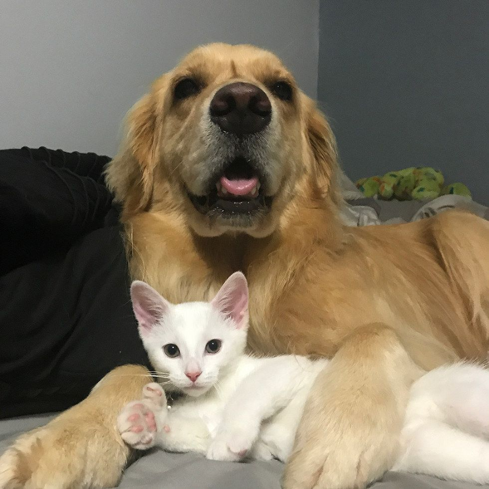 A Tiny Kitten Was Brought Into An Emergency Vet Hospital In Need Of Someone To Love A Man Who Works There Took Him Home And Soon A Cat Hug Giant Dogs