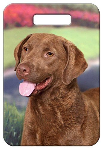 Set Of 2 Chesapeake Bay Retriever Luggage Tags Details Can Be Found By Clicking On The Image Note It Is Affili Chesapeake Bay Retriever Retriever Chesapeake