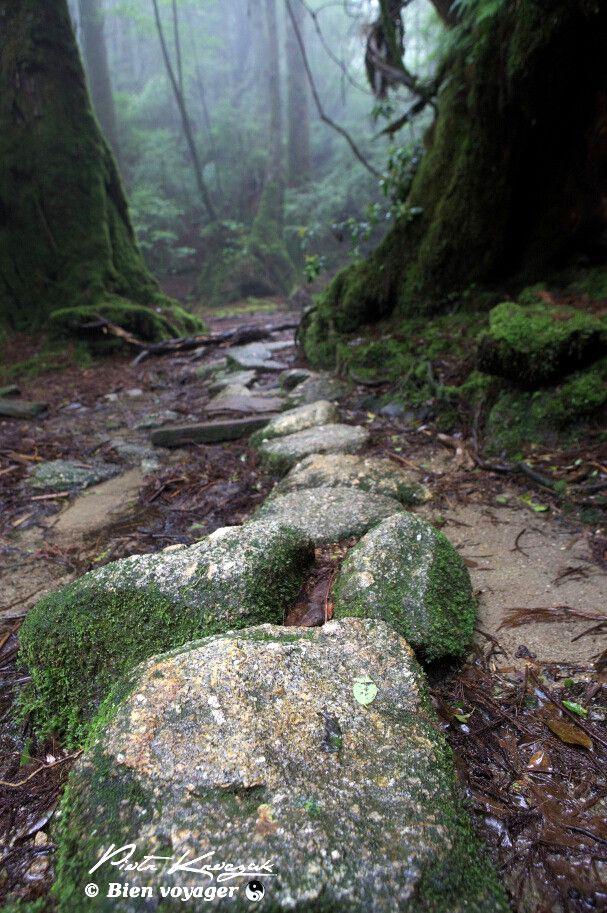 Yakushima mononoke (6) #yakushima #mononokeforest #forest #japan #miyazaki