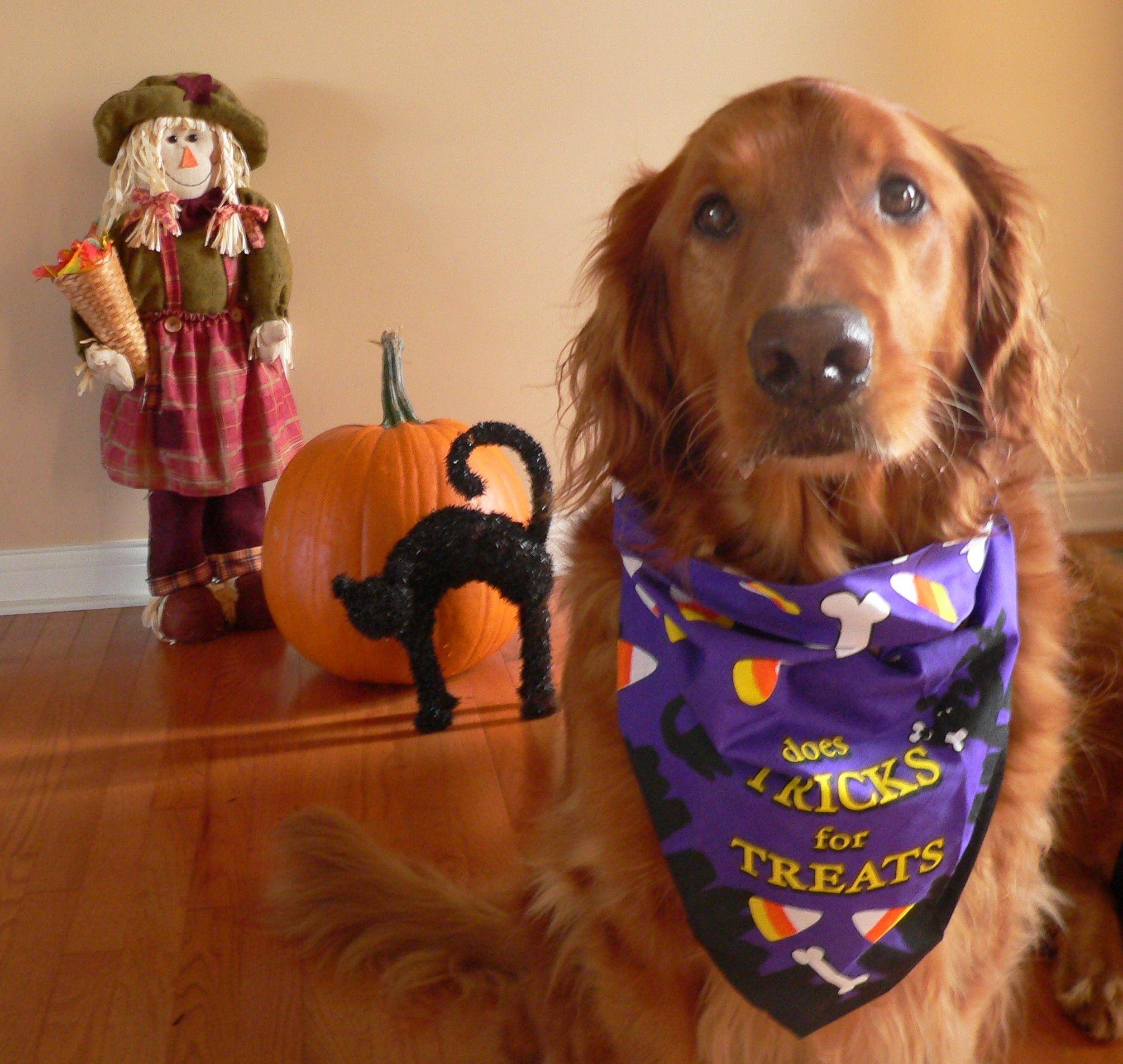 Will Do Tricks For Treats Happy Halloween