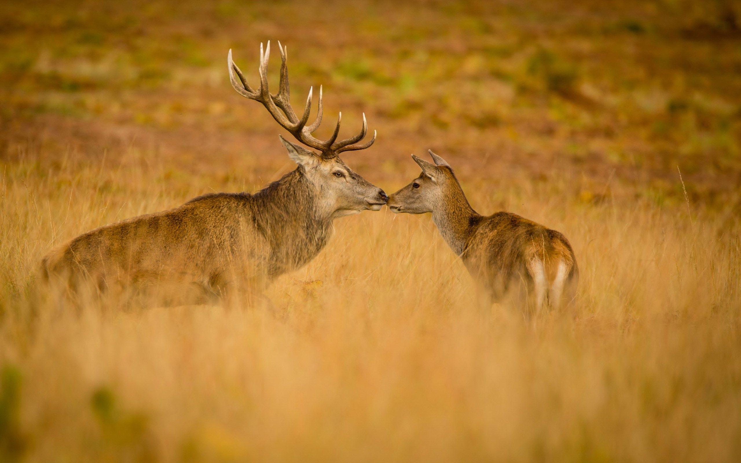 2017 03 03 deer wallpaper full hd backgrounds 1856199 2017 03 03 deer wallpaper full hd backgrounds 1856199 voltagebd Image collections