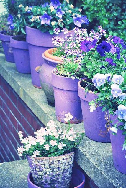 Potted In Purples.love This Row Of Purple Pots With All Shades Of Purple  Flowers. What About Potting A Variety Of Flowers In Pots The Color Of The  Flower.