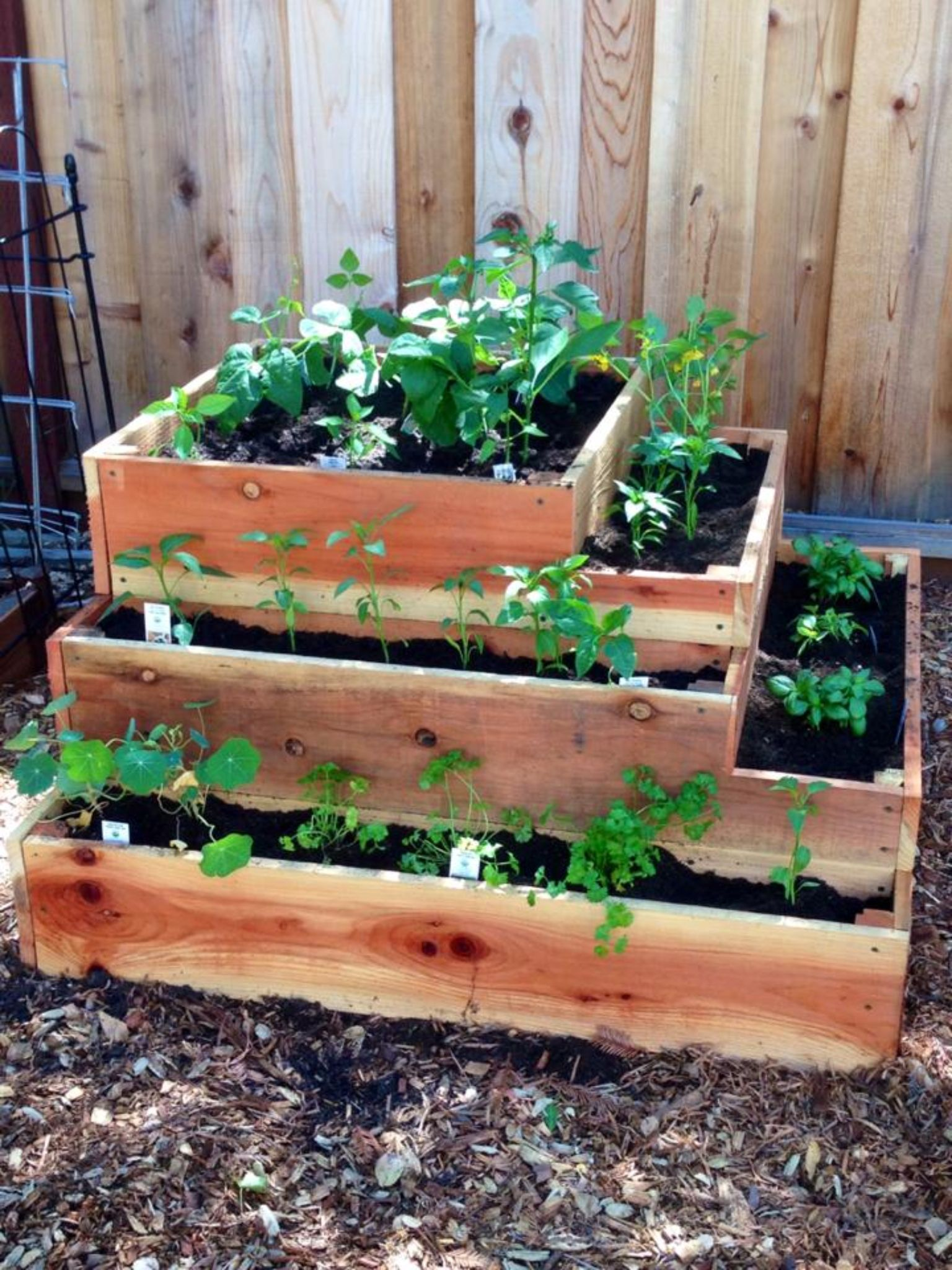 my new tiered garden planter, built from redwood fencing. easy