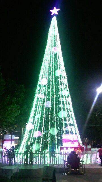 Canberra Christmas Tree 2015 Canberra The Bush Capital (ACT