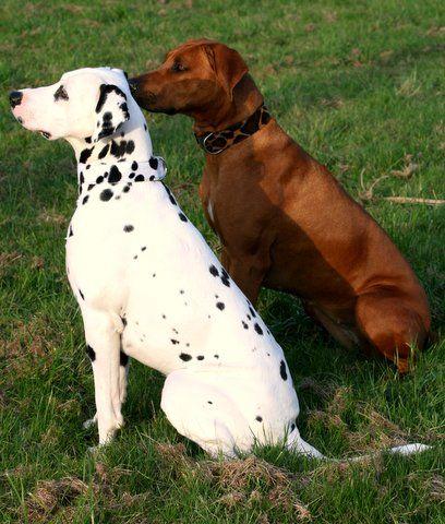 Pin Von Udako Shop Auf Hundehalsband Fellimitat Hundehalsband Hunde Halsband