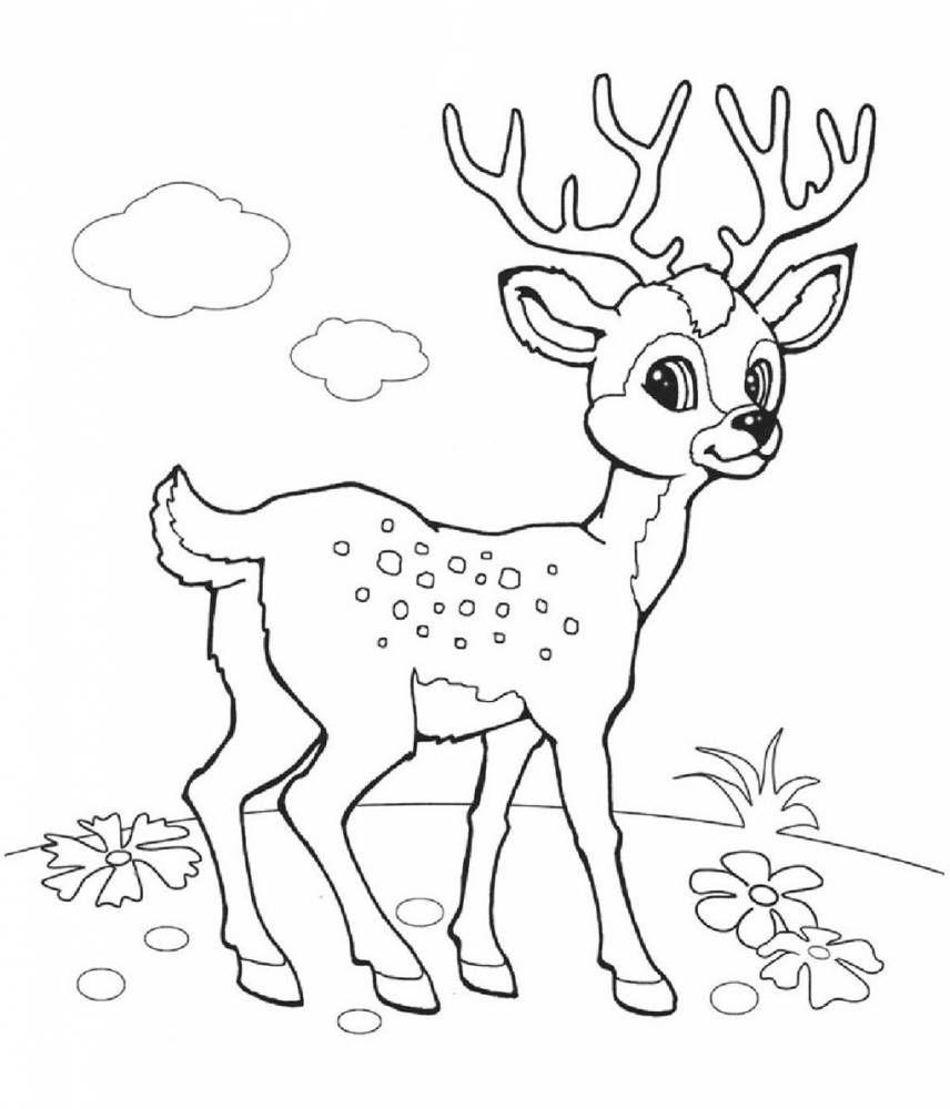 Раскраска Олень - детские раскраски распечатать бесплатно ...