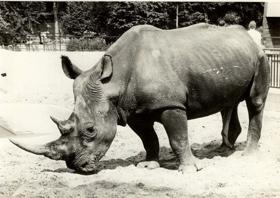 Pin On Rhinos