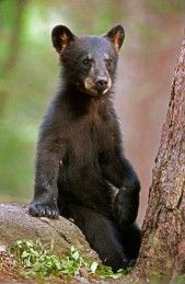 """""""Hi There! 'just sittin' and chilin', watching the view"""" ;0) _______________ Jewel's cub. that is so cute. July 2,14"""