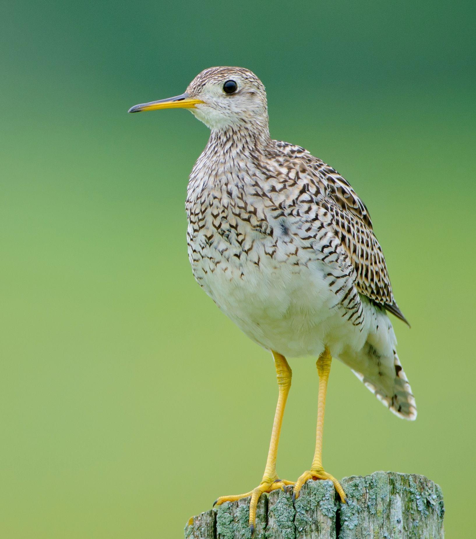 Birds, List of birds, Beautiful birds