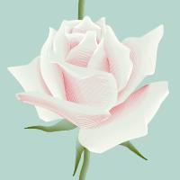 http://www.colourlovers.com/pattern/4840254/Rose