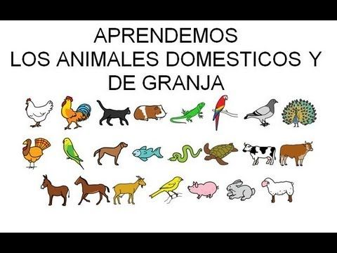 Aprendemos Los Animales Domésticos Animal Doméstico Clasificación De Animales Proyectos De Educacion