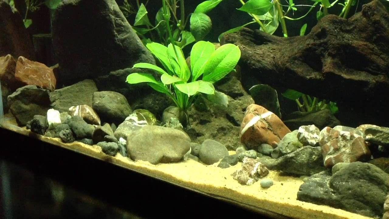 Planted 10 Gallon White Cloud Mountain Minnow River Ecosystem Aquarium Setup Plants Ecosystems