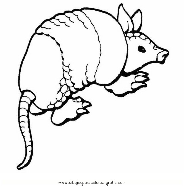 armadillo coloring page animals town animals color sheet armadillo printable coloring