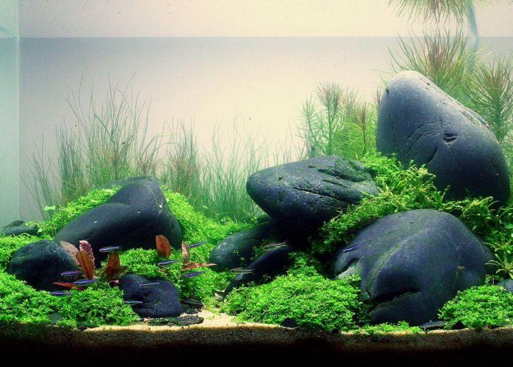 aquarium einrichten ideen steine wassepflanzen. Black Bedroom Furniture Sets. Home Design Ideas