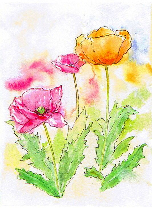Pen And Wash Poppies Watercolor Poppies Watercolor Paintings