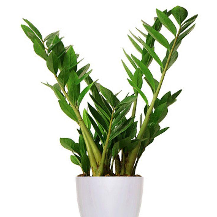 10 Indestructible Houseplants Low Lights House Plants 400 x 300