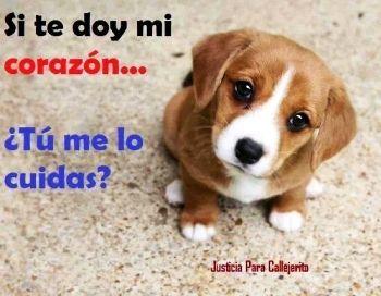 Cuida De Los Animalitos Perros Perros Frases Y Perros Y