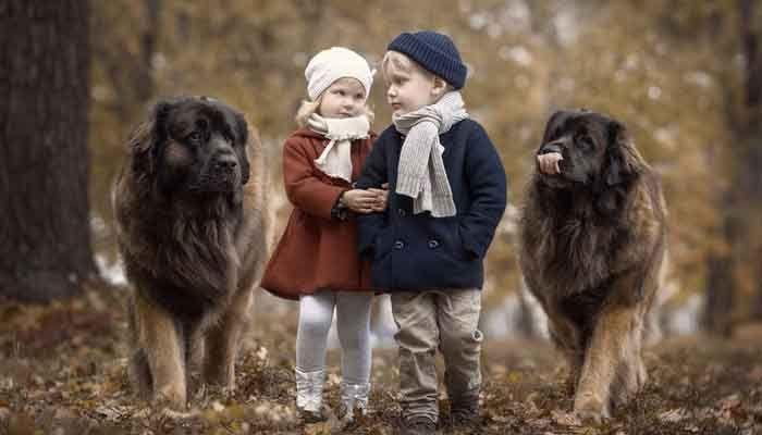 Anı Ölümsüzleştirmek: Küçük Çocukların Büyük Köpekleri