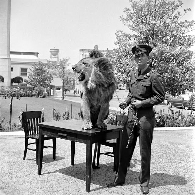 Amazing Photos of Fearless Fagan, the Incredible Lion Who