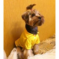 Cute-Various-Pet-Small-Dog-Cat-Puppy-Polo-T-Shirt-Suit-Clothes-Outfit-Apparel