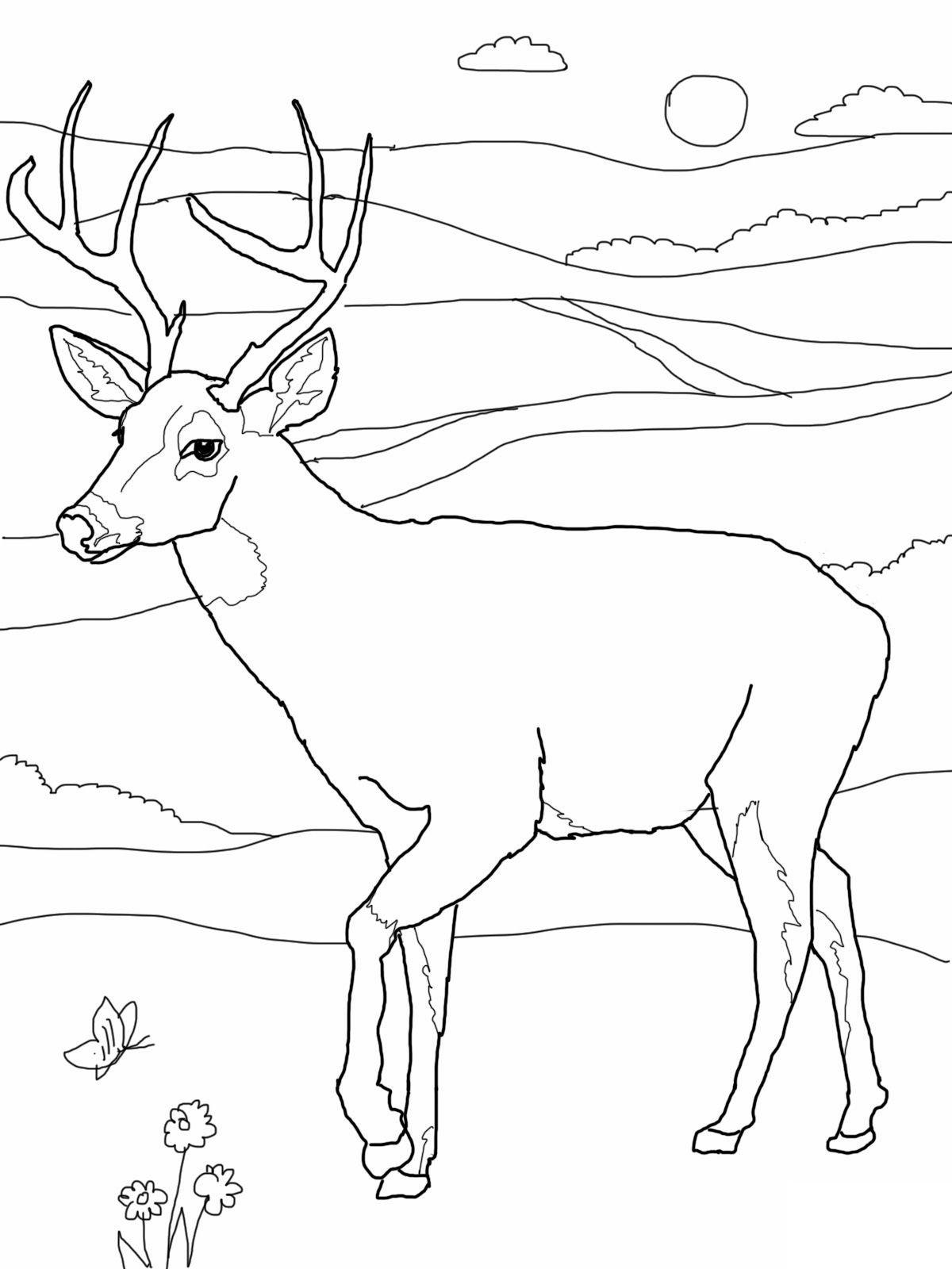 Free Printable Deer Coloring Pages For Kids | Deer hunting, Felt ...