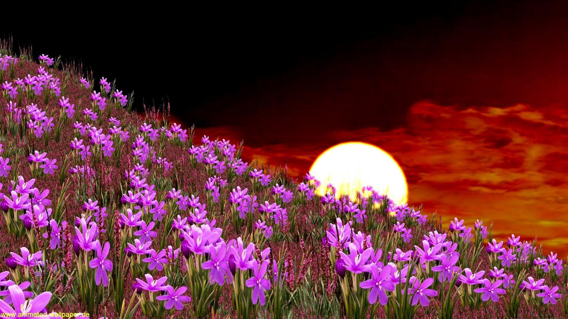 Animated Desktop Backgrounds Purple