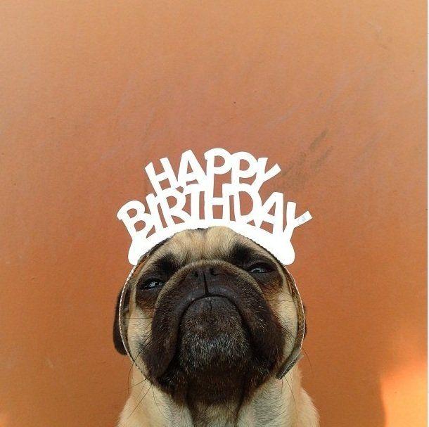 Norm The Pug An Internet Star Happy Birthday Pug Birthday Pug Funny Happy Birthday Images