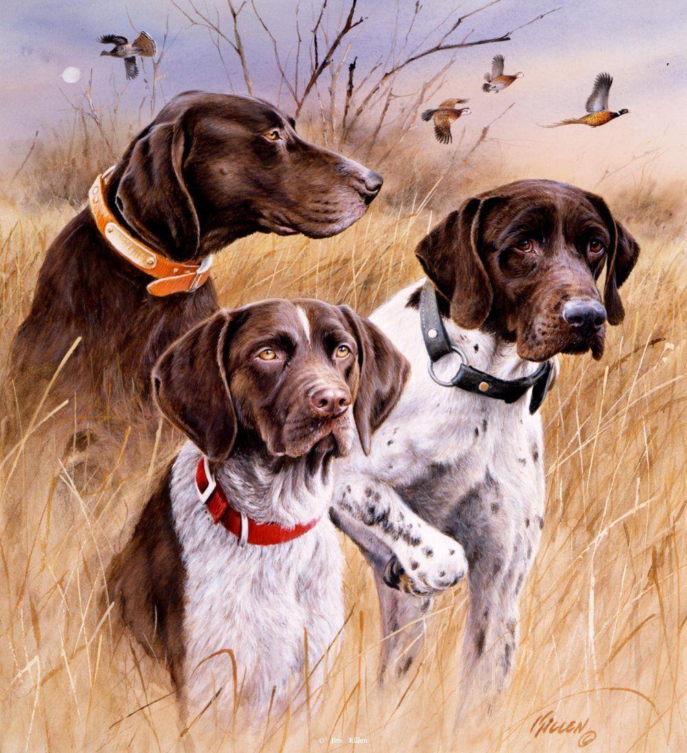 "Bien-aimé Hunting Dog Prints Art | Great Hunting Dogs"" - German Shorthairs  MD96"