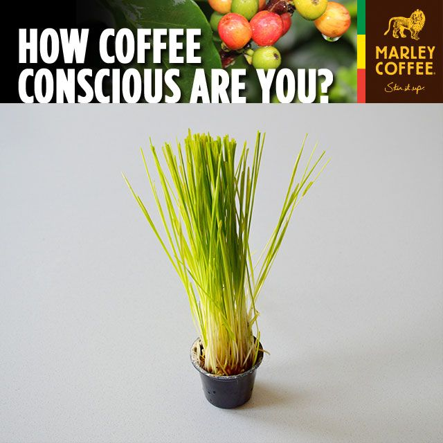 Coffee Conscious: Reusing Your RealCups™ on the Blog!