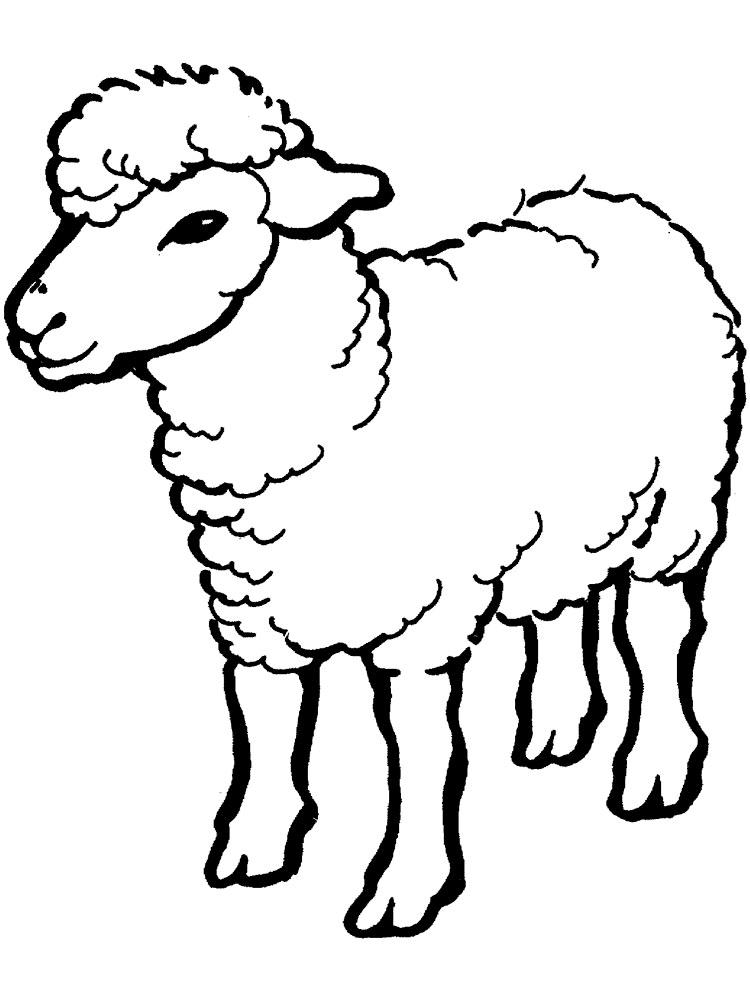 Pin Oleh Kamila Mila Di Kambing Hewan Binatang Domba