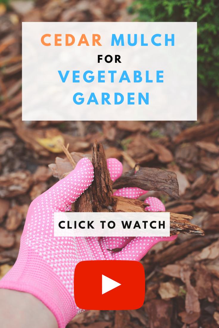 Cedar Mulch For Vegetable Garden Mulch For Vegetable Garden Garden Layout Vegetable Indoor Vegetable Gardening