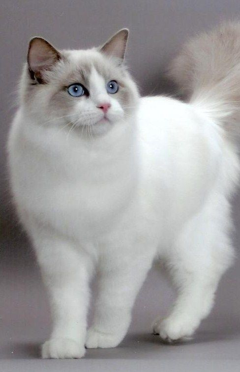 10 Best Amazing Videos For Cats Beautiful Cats Popular Cat