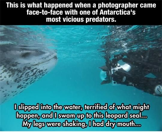 A National Photographer's Crazy Encounter With A Leopard Seal.What Happened Next Is Amazing.