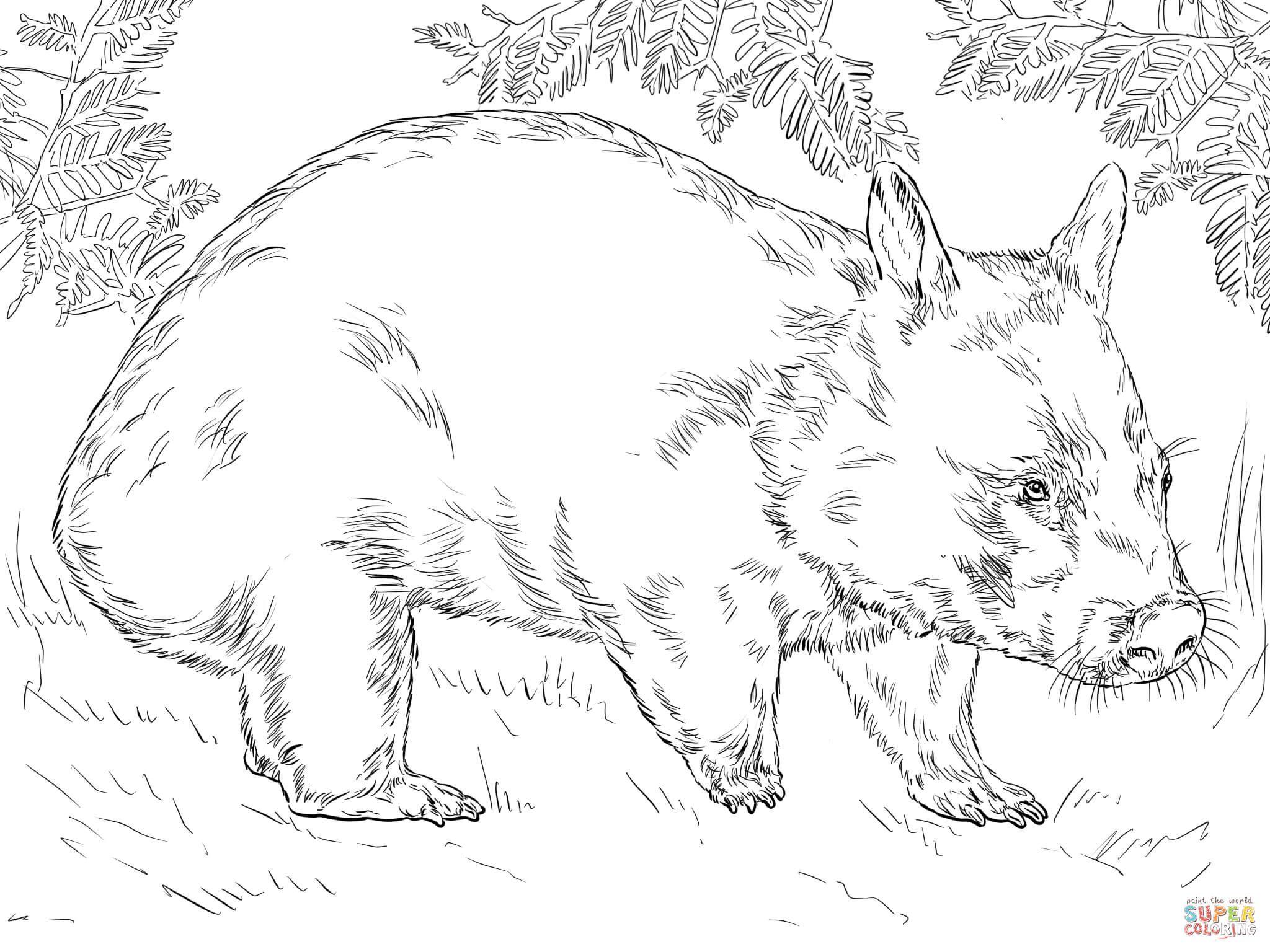 U³mbat del Norte Super Coloring animales Pinterest