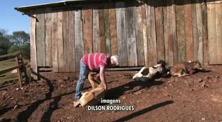 """""""O Grito do Bicho"""": Cães atacam animais em chácara, em Francisco Beltr..."""
