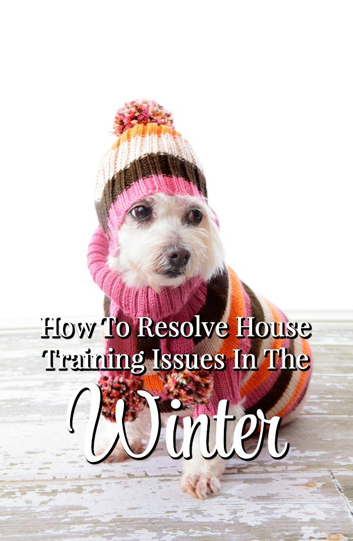 How To Resolve House Training Issues In The Winter Dogtraining