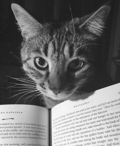 Resultado de imagen para gatos poemas