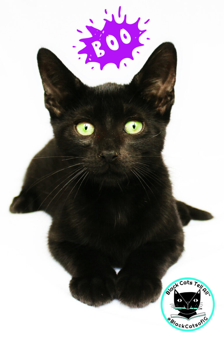 Official Black Cat Awareness Month Video Black Cat Cute Black Kitten Cats