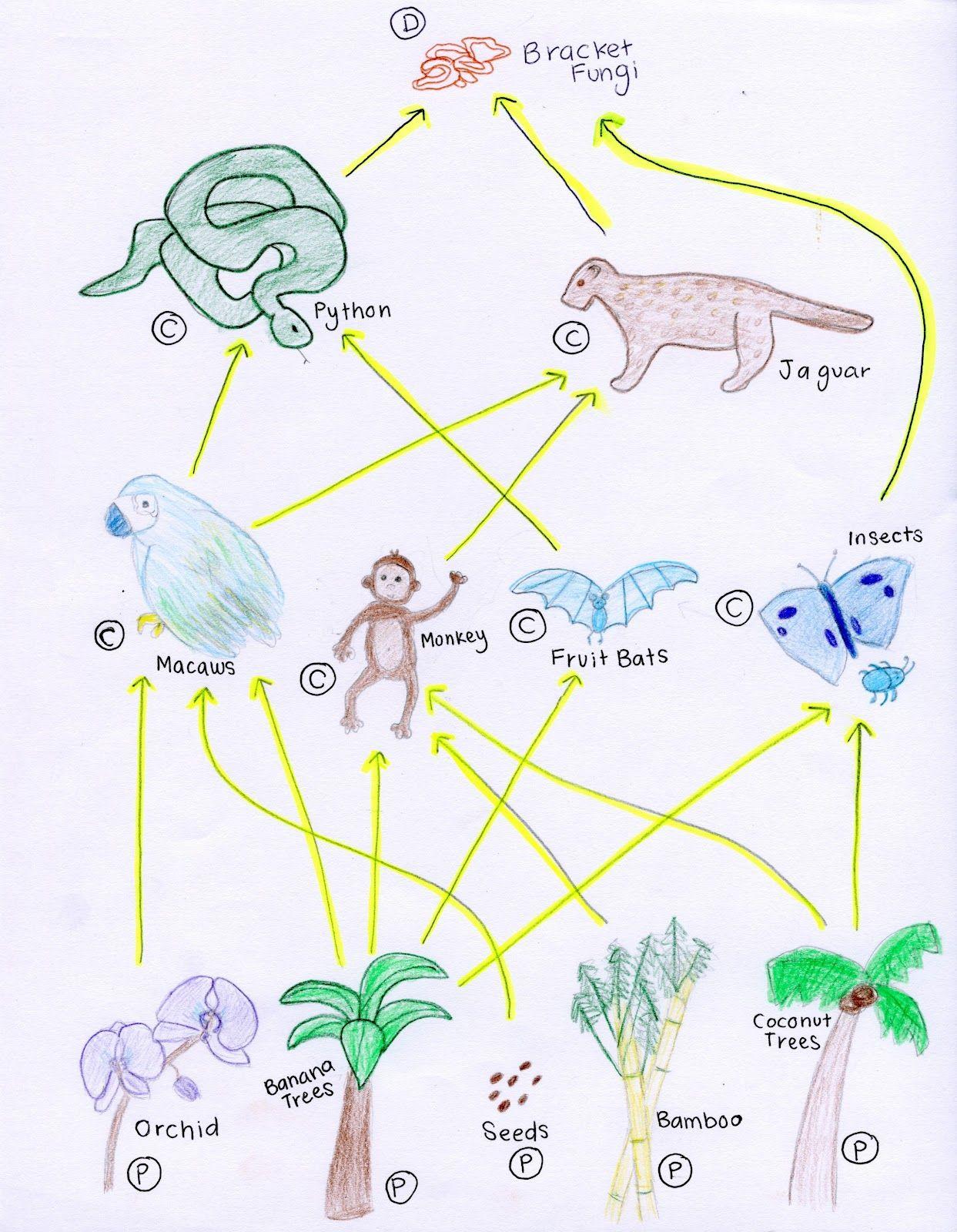 Tropical Rainforest Food Web Diagram Foot Skeleton A Z Art Of Teaching Pinterest